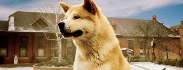 Netflix Fix: Hachi: A Dog's Tale